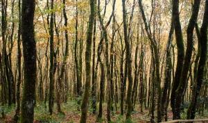Skanda Vale Forest